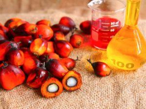 Плоды с пальмы