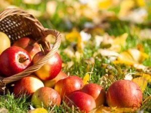Полезный состав яблок